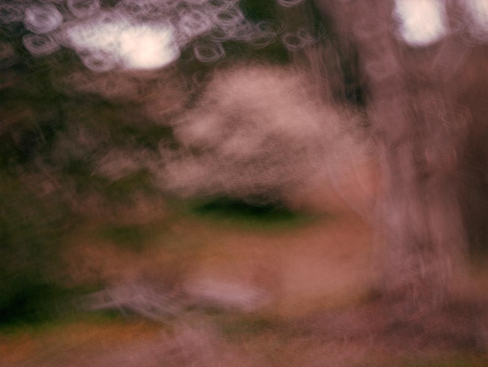 /  Blossom Tree