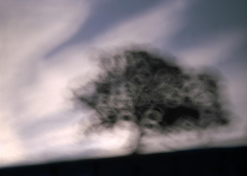 /  Twilight Tree