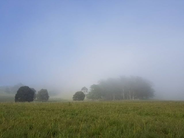 Early morning summer mist in the valley. Not my usual type work. but, still okay. #landscapephotography #newzealandartist #artforum #iso_society #fineart  #fineartforum #modernart #kunst #curator #artistsoninstagram #sydneyartist #art #ratemodernart #fineartlandscape