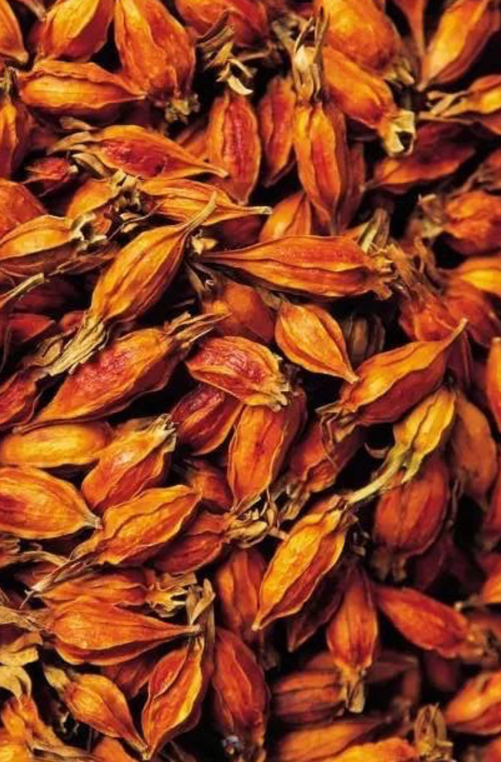 HPF Natural flower dyes.jpg