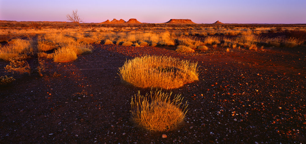 Spinifex Circles, Little Sandy Desert, Western Australia, 2008.  Edition of 3.