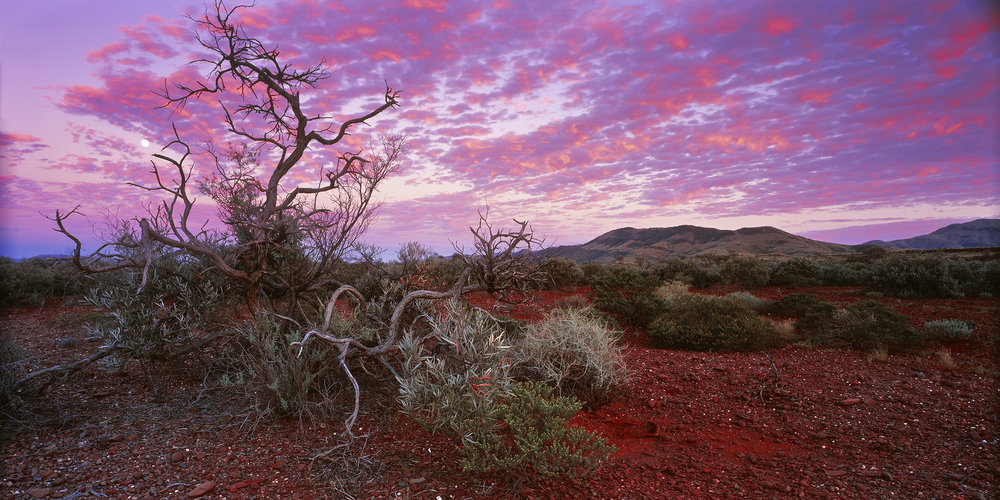Snakewood, Paraburdoo, Western Australia, 2013. Edition of 3.