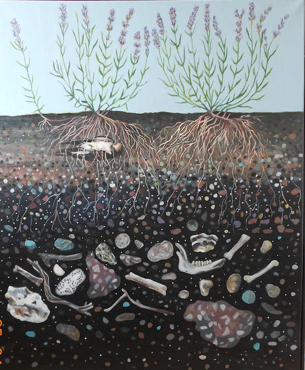 Lavandula Angustfolia // 2012