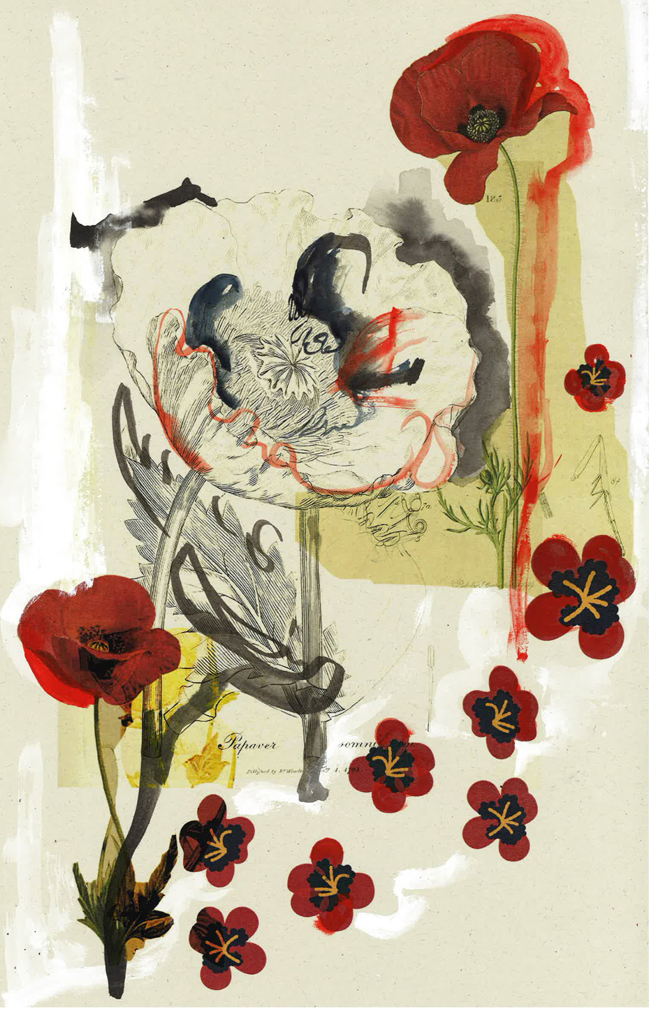 gallery-collage-poppies-Olivia Suguri.jpg