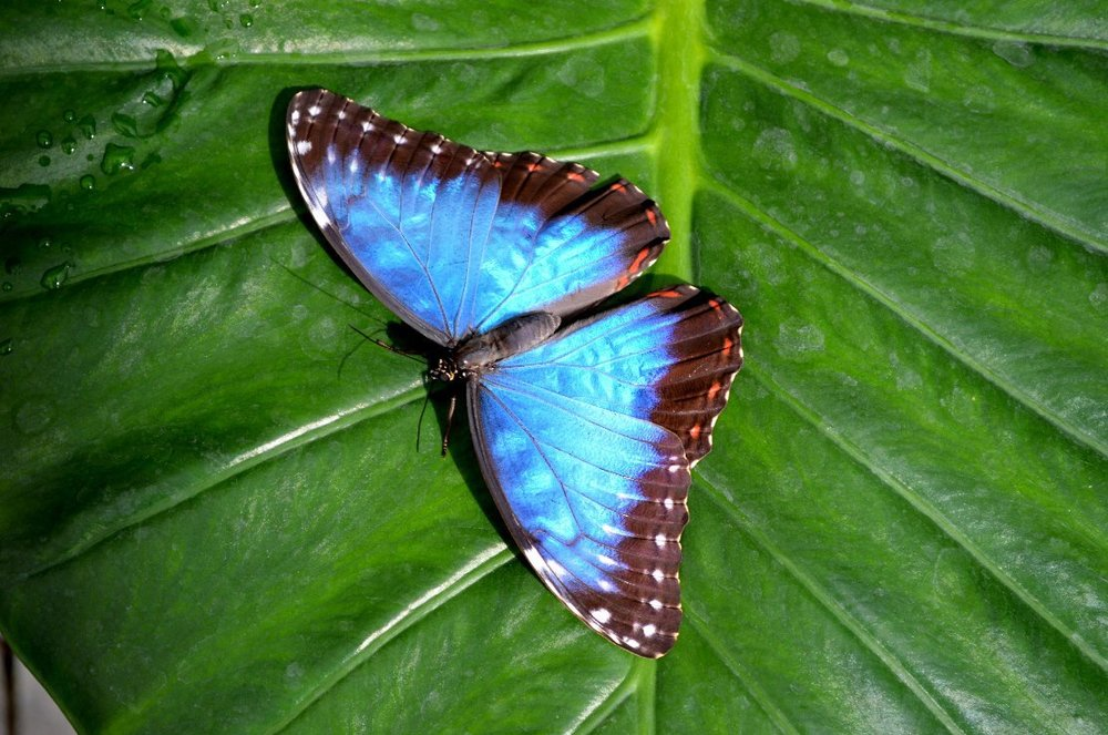 butterfly house southsea 3.jpg