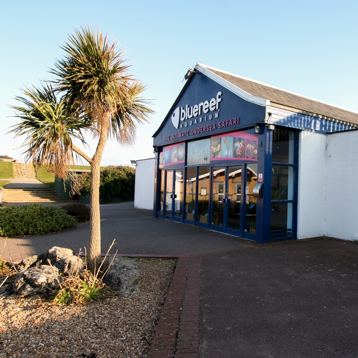 Blue reef aquarium -