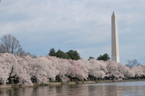 washington-in-spring.jpg