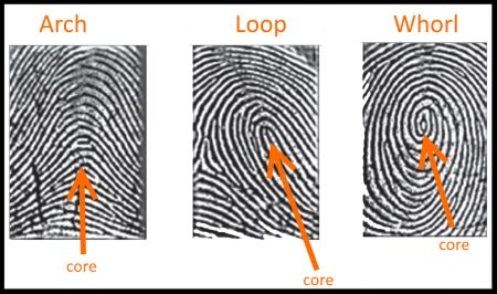 Fingerprint friction ridge patterns
