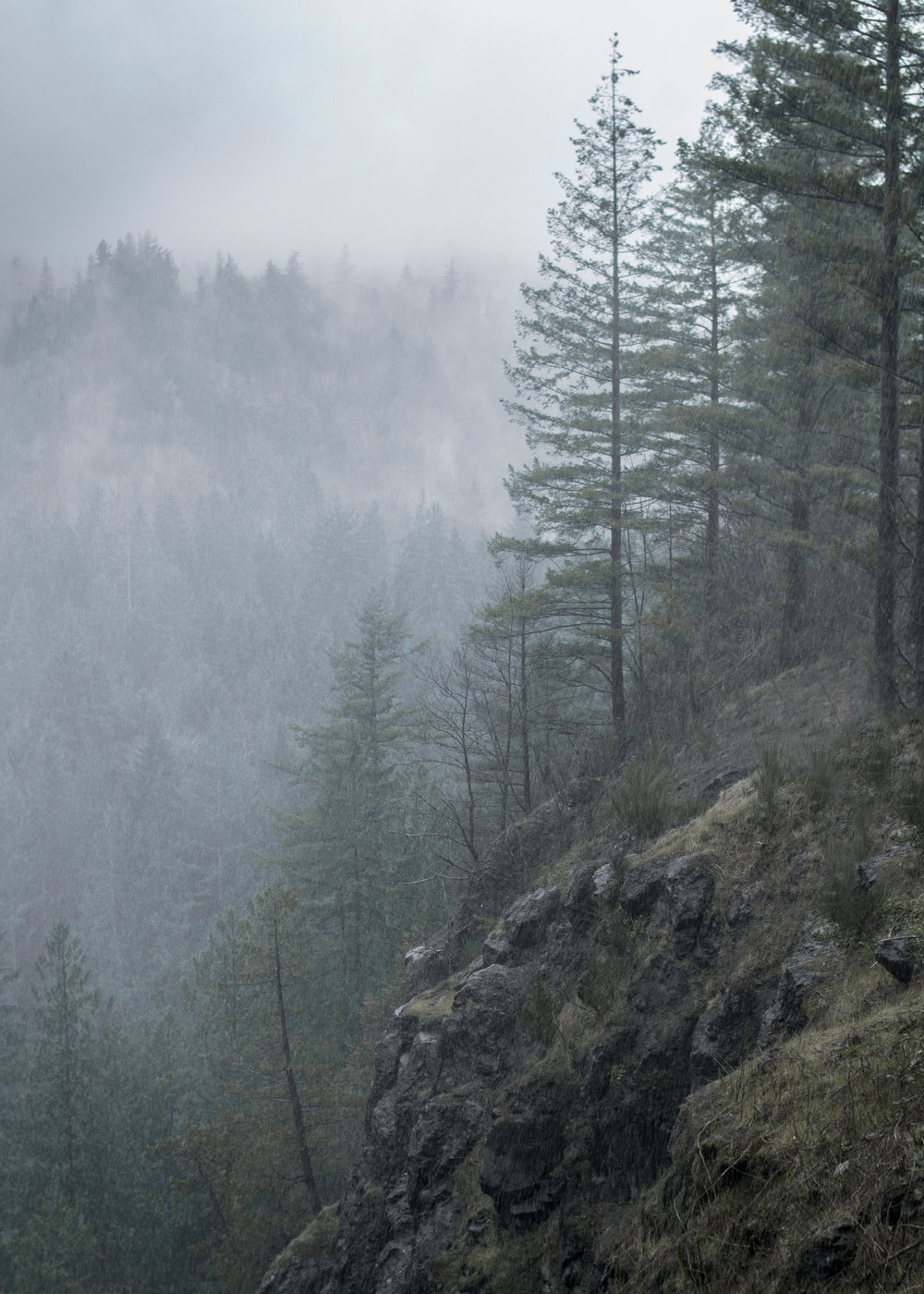 Stay Curious: Pacific NorthWest -