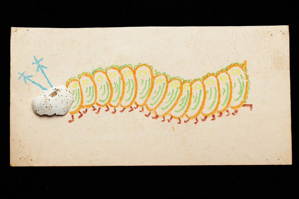ShellArt-Centipede by Thomas Wilson Laney