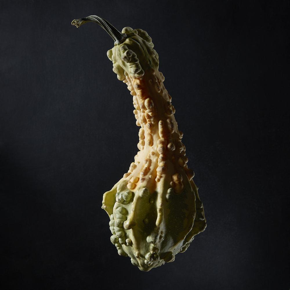 GourdPortrait-2.jpg