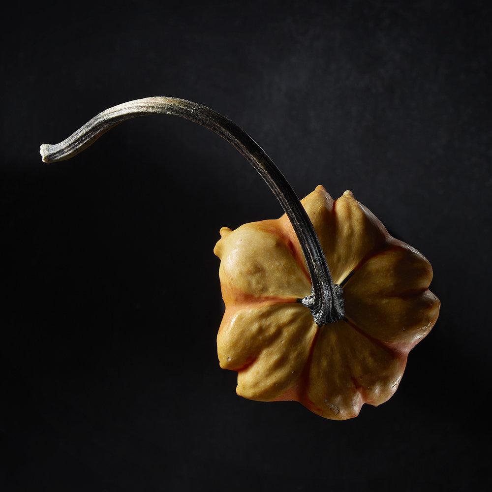 GourdPortrait-6.jpg