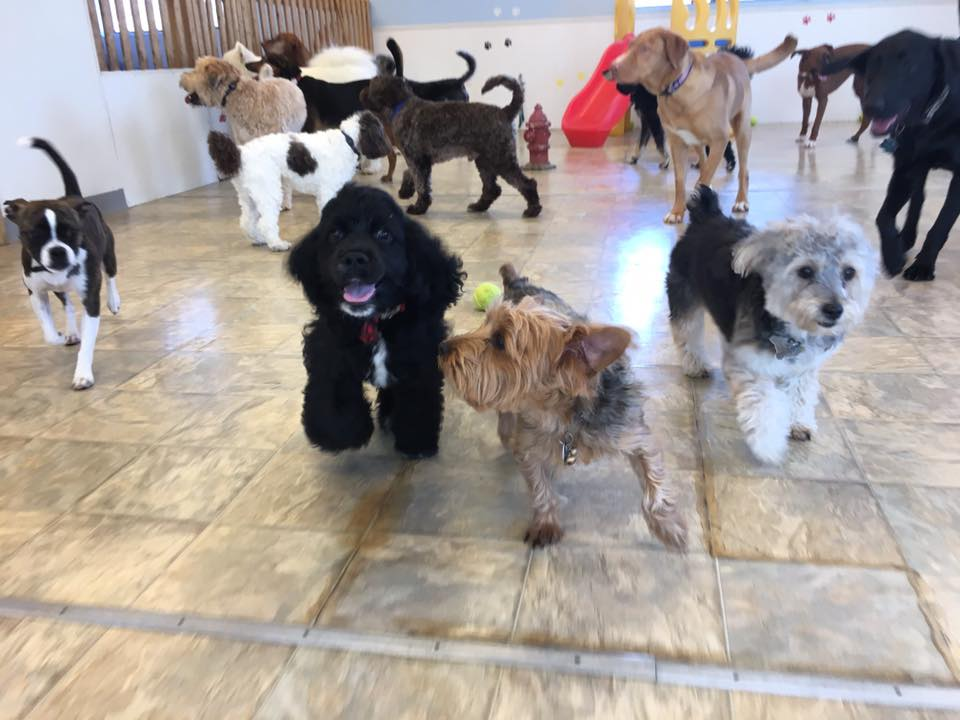 A Pet's Choice Dog Daycare Woburn, MA