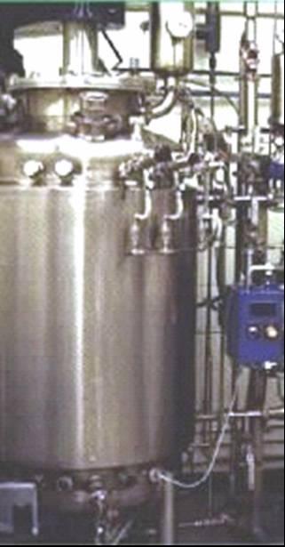 Enzyme Fermentation