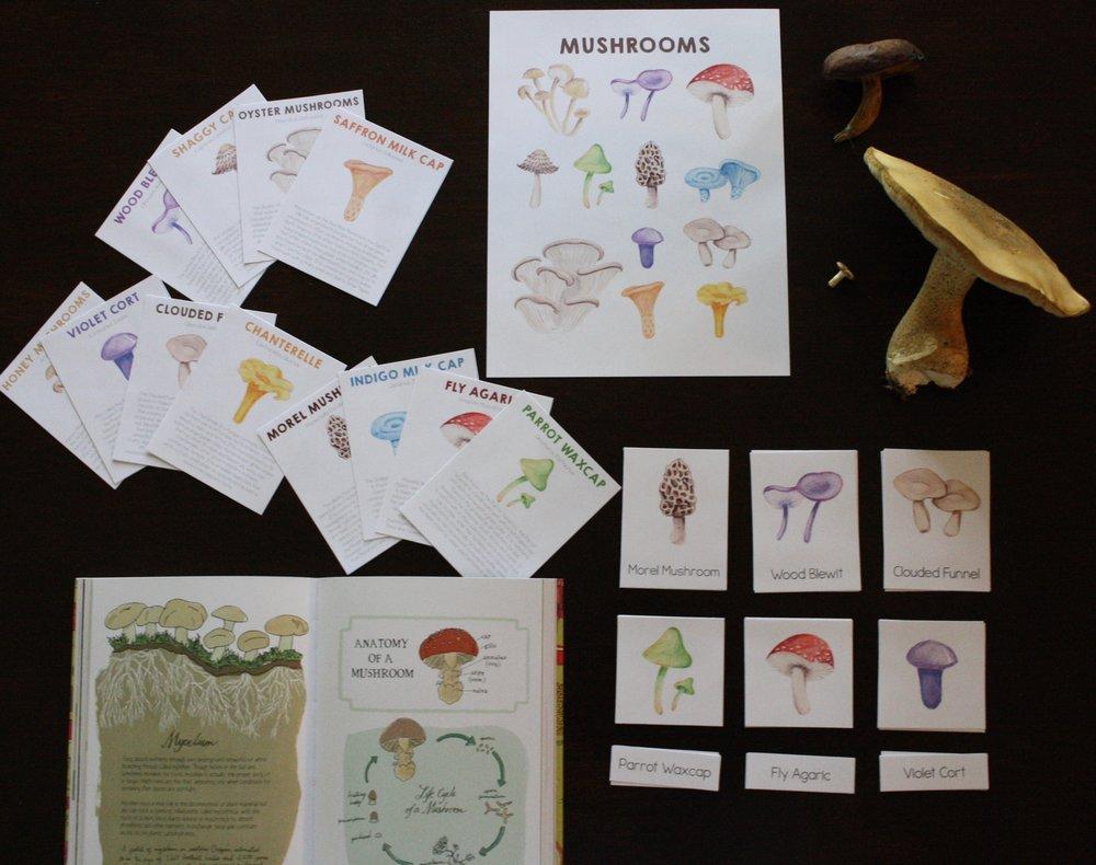 Mushrooms BUNDLE — brave grown home