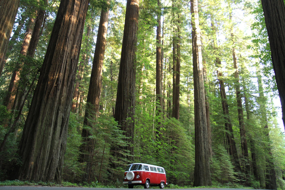 Redwoods and VW Bus.jpg