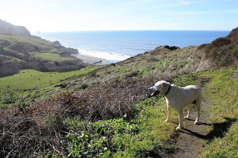 Dog Friendly Hiking in Ferndale CA | Lost Coast Headlands Trails