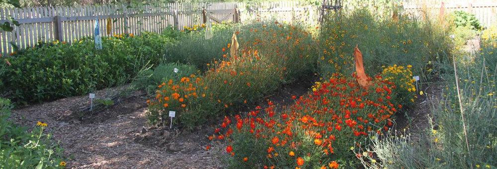 Janice-Ford-Memorial-Dye-Garden-fb-banner.jpg