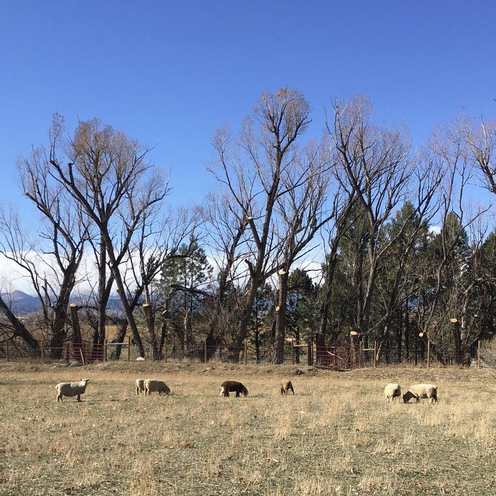 Balto Farms - Boulder, CO