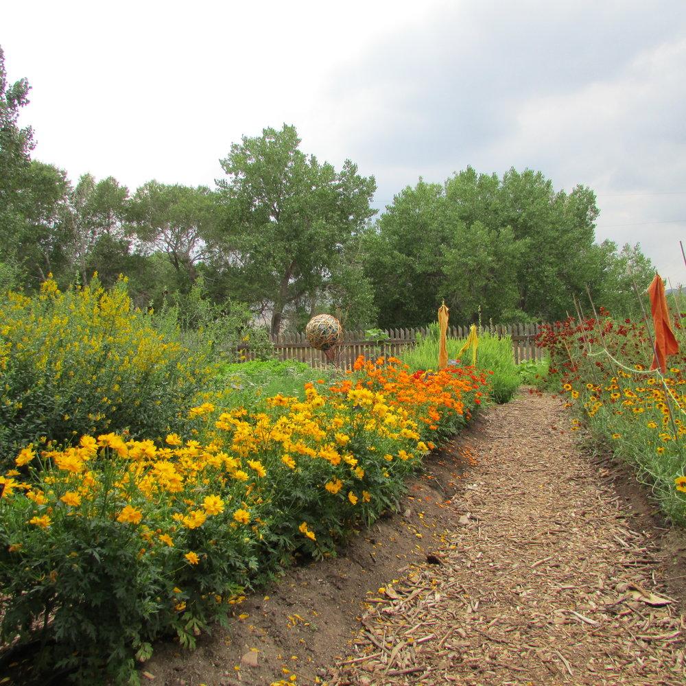 dye garden.JPG