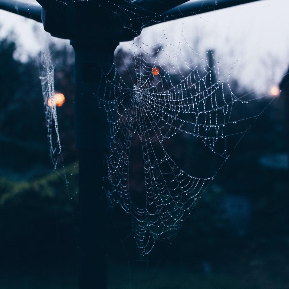 spidersweb.jpg