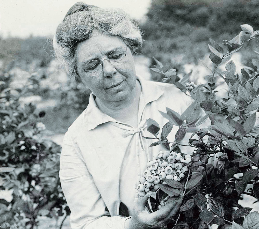 Elizabeth White, blueberry farmer and pioneer in cultivating the highbush blueberry.    Photo courtesy Whitesbog Preservation Trust