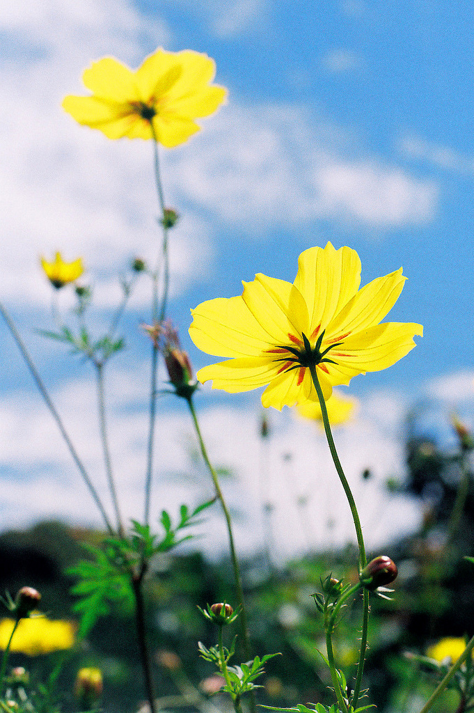 Yellow  by Khánh Hmoong, licensed CC BY-NC 2.0 via Flickr