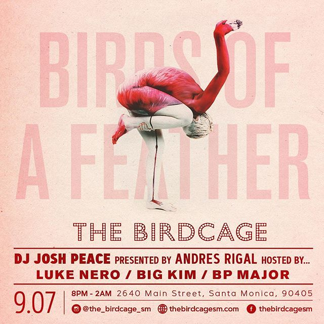 Happy Thursday birdies! 🍾 We'll see you on the dance floor tonight 💃🏻💃🏻 #TheBirdcage #lgbt #lgbtq #bar #SantaMonica