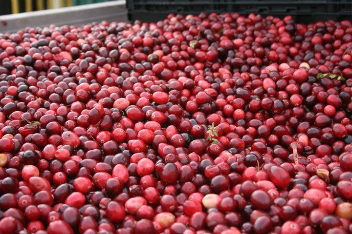 cranberry 3.jpg
