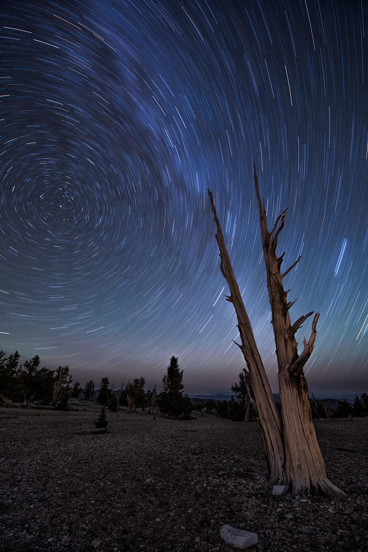 Ancient Bristlecone Star Trails