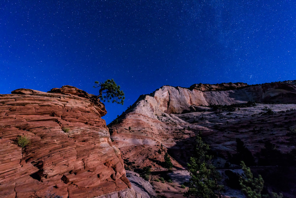 Lone Tree of the Moonlit Night