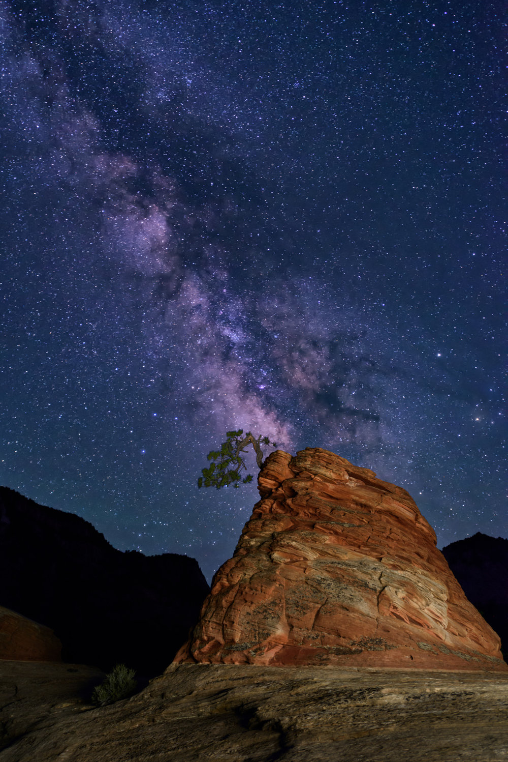 Rocks and Stars and the Little Tree that Could