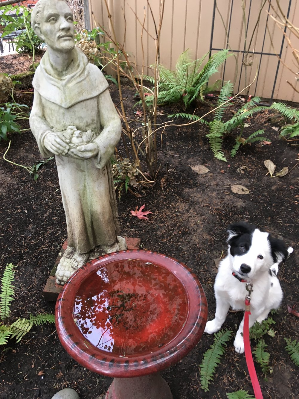 Roger, a parishioner's puppy, enjoys the company of St. Francis in our Parish gardens.