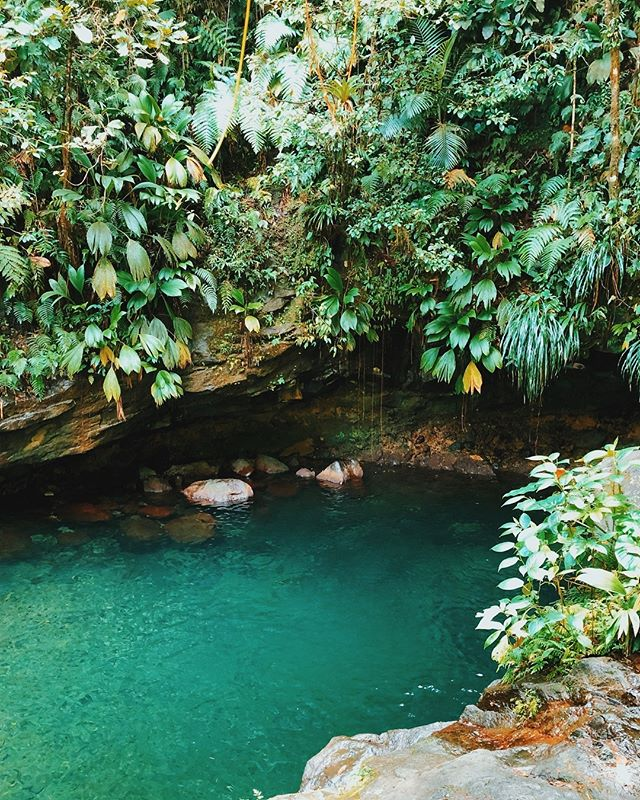 "This is my favorite photo from our trip! This is Le Bassin Paradis or ""Paradise Basin"" in Guadeloupe National Park. 🔸 We accidentally came across it after we finished another hike in the park to see waterfalls called Les Chutes du Carbet (see earlier photo). 🔸 Bassin Paradis is a pretty, blue swimming hole at the bottom of a relatively short, but very steep and muddy trail. The trail isn't hard, but you have to go slow and you need to be in some kinda shape to get up and down the rocks, and climb over the tree roots. It's worth it once you get to the bottom though and you can jump off the rocks into the pool! 🔸 Tip #4 - No matter where you stay on the two main islands, make time to spend a day in Guadeloupe National Park. It's huge, with lots of hiking trails, waterfalls, a volcano(!!!), hot springs, rainforests and tropical views everywhere. Other than the beaches, it was my favorite part of the trip. Even driving through the park is fun! 🔸 #cliktrips #Guadeloupe #guadeloupeislands #ig_guadeloupe #ilesguadeloupe #visitguadeloupe #tropicalparadise #tropicalvibes #tropicalvacation #tropicaladdicted #caribbeanvacation #caribbeantravel #caribbeanisland #suitcasetravels #culturetrip #electrifytravels #itsbeautifulhere #mytinyatlashello #travelwithfathom #somewhereiwouldliketogo"