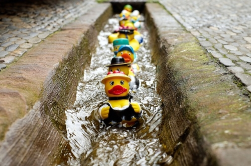 These ducks have some real coordination to swim down this stream like this in formation.