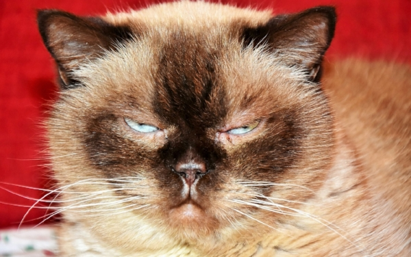 """This just isn't my day for stock photos. Searching stock photos for """"short"""" brings up a bunch of cat pictures for some reason, so here's how I feel right now."""