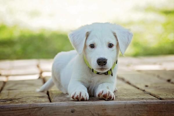 puppy-1903313_1280.jpg