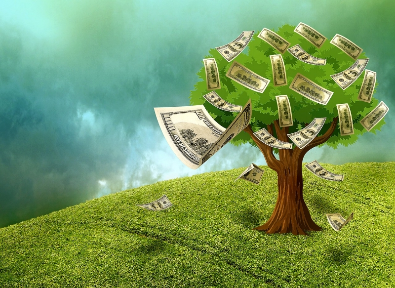 The money tree harvest this year is just a little lighter than previous years.