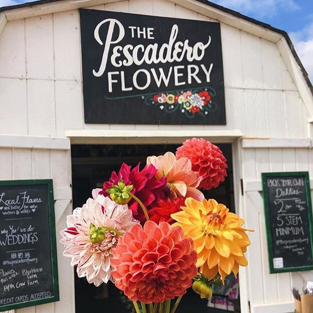 Gosh, y'all post so many great pics! Here are a few visitor photos from the last couple weeks. 💗🙏 #pescadero #upick #dahlias #shopsmall