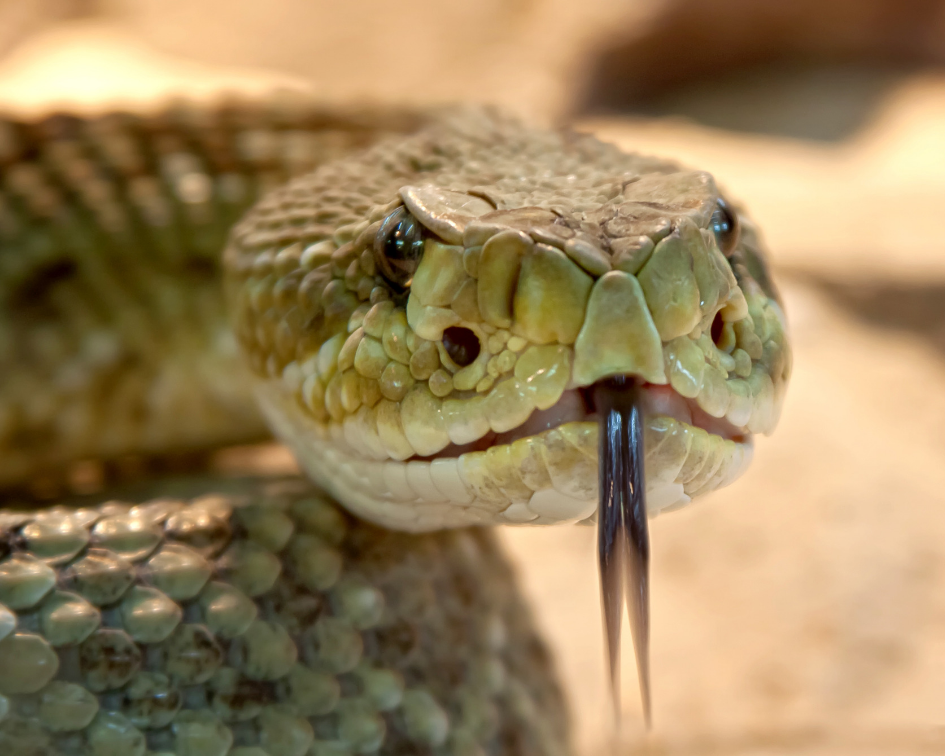 To rid your home or area of snakes we will:  1) Look for entry points and den sites  2) Set up traps and humanely relocate  3) Seal up points of entry and close up den sites