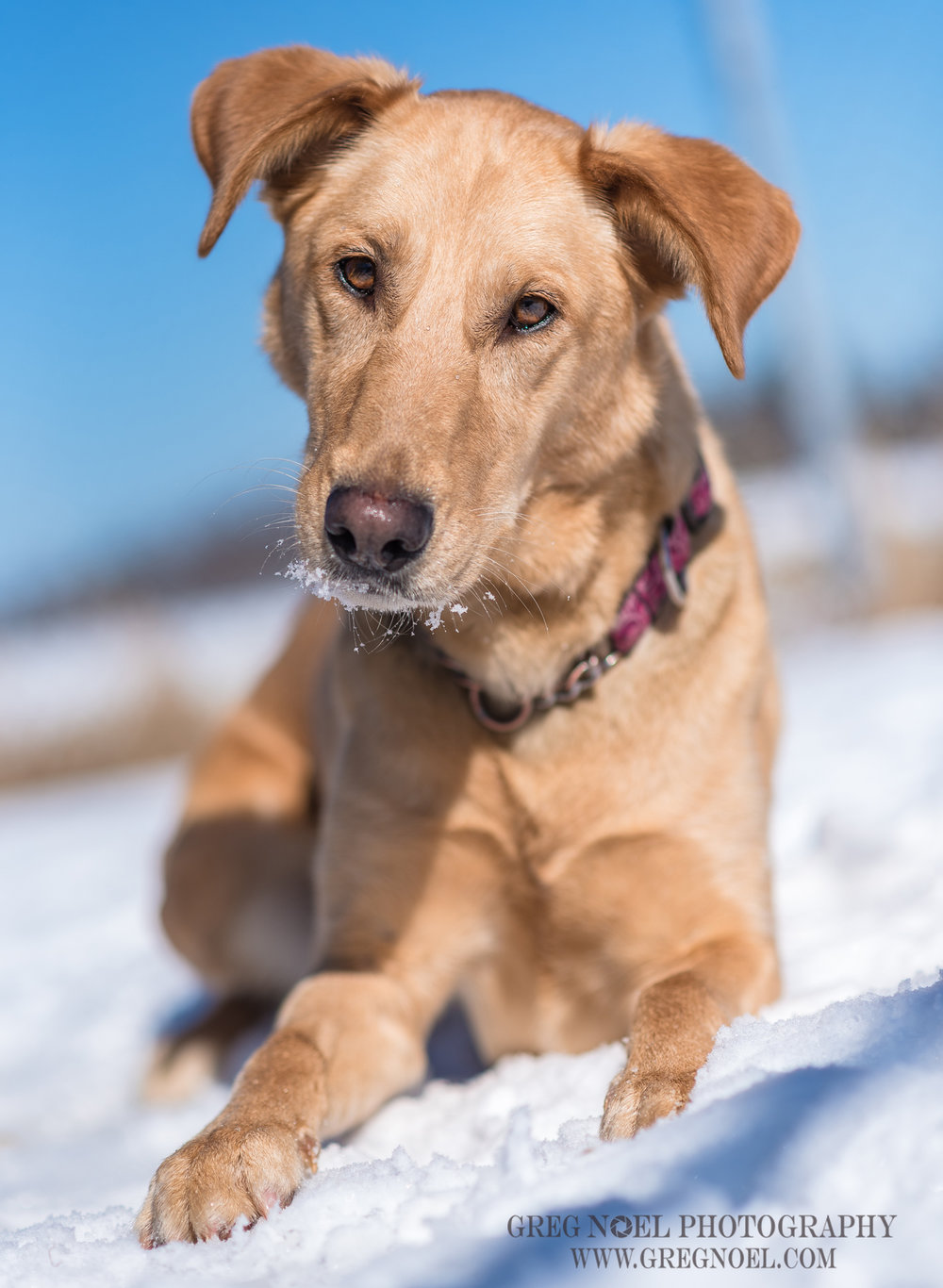 SPCA March12017-3.jpg