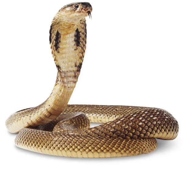 3) Snake -