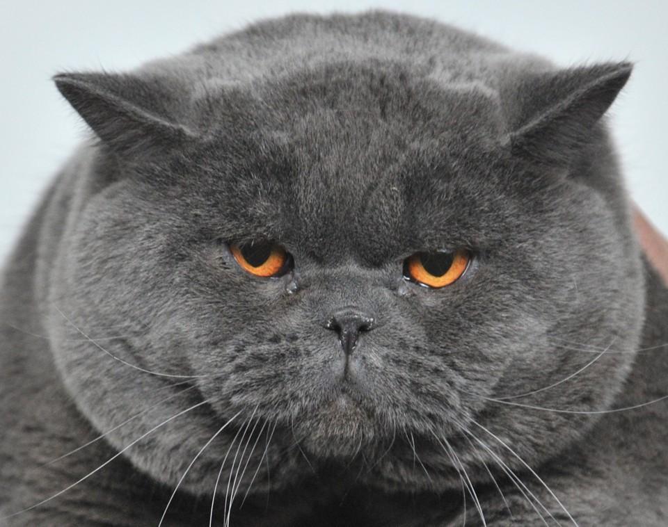 6) A Cat -