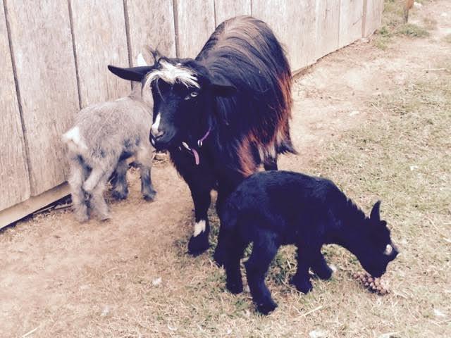 Dottie with babies 2 weeks.jpg