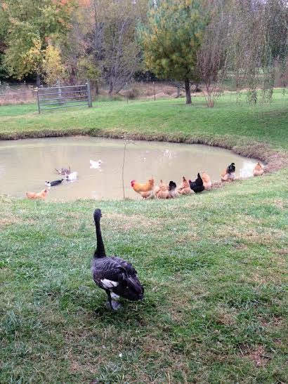 At the Pond.jpg