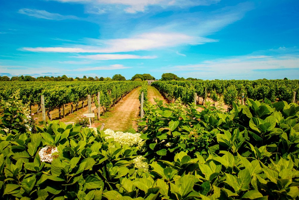 Wölffer Estate Vineyard in Sagaponack, New York