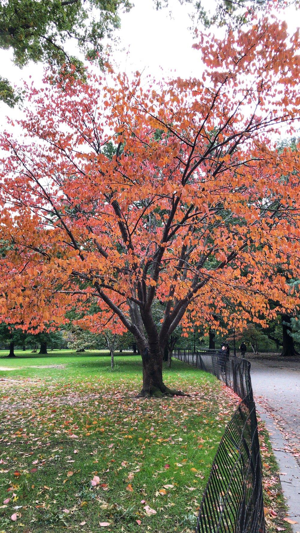 Central Park Fall 2018