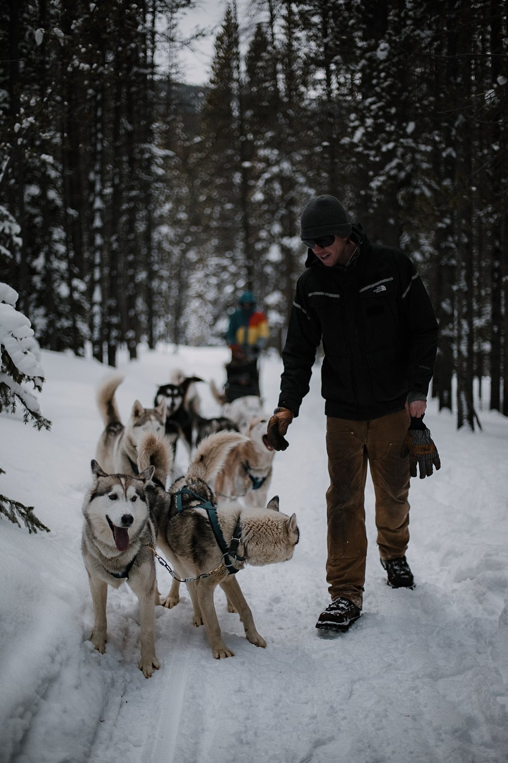 sleddogs, breckenridge elopement photographer, breckenridge wedding photographer, frisco elopement photographer, leadville elopement photographer
