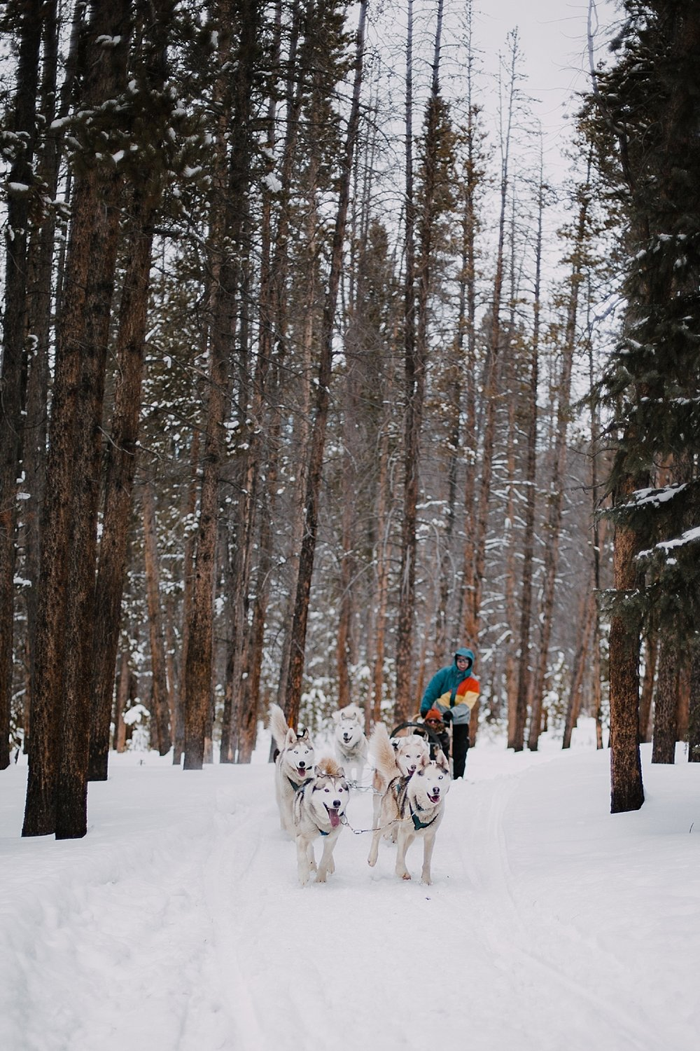 dogsledding in breckenridge, breckenridge elopement photographer, leadville elopement photographer, sapphire point elopement photographer, breckenridge wedding photographer