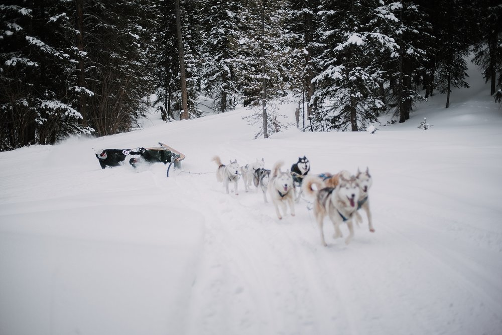 colorado dogsled team, good times adventures wedding photographer, breckenridge wedding photographer, breckenridge elopement photographer, leadville elopement photographer, sapphire point photographer